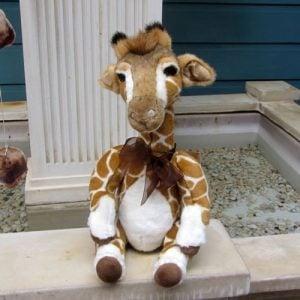Reech, the giraffe