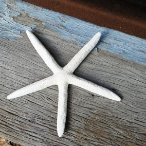 Starfish – Five Fingered Medium