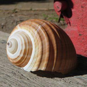 Seashell – Tona Sepa