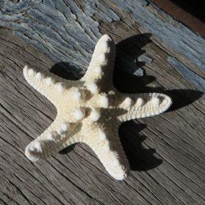 Starfish – Thorny