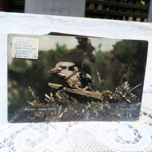 Postcard – Kookaburra