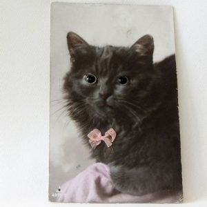 Postcard – Cat facing front with glass eyes