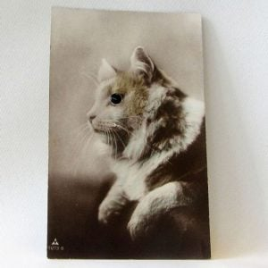 Postcard – Cat facing left with glass eye