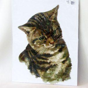 Scrap – Cat Portrait