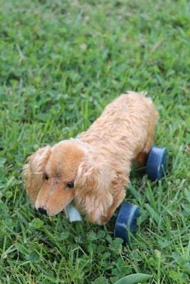 Steiff Waldi Dachshund Dog on wheels 17cm – vintage