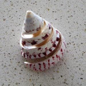 Seashell – Spiral Pink