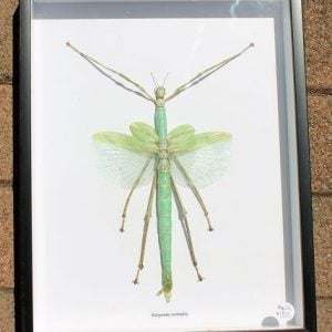 Stick Insect – Framed