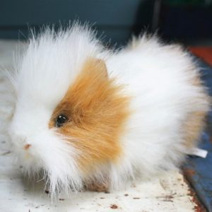 Guinea Pig by Hansa – Brown & White