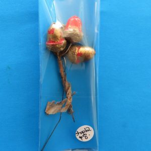 German Charity Acorn Pin