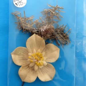 German Charity Flower Pin