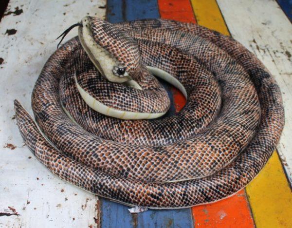 morpeth gift gallery hunter valley hansa plush creations bird animal insect snake python