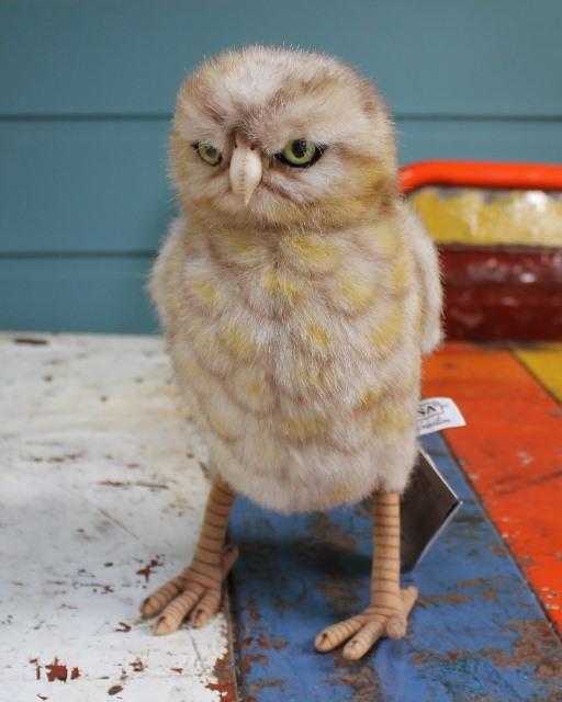 morpeth gift gallery hunter valley hansa plush creations bird animal insect burrowing owl