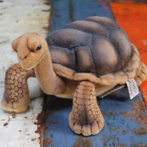 Galapagos Turtle by Hansa