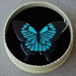Erstwilder Brooch – Blue Emperor (Butterfly)