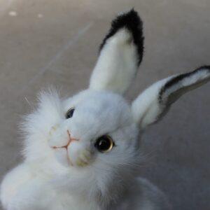Hansa – White Rabbit Begging