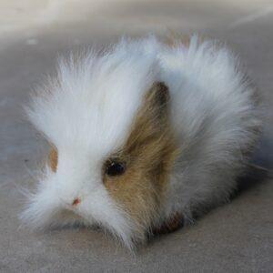 Hansa – Guinea Pig (Brown/White)