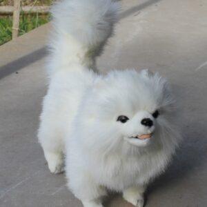 Hansa – Pomeranian Dog